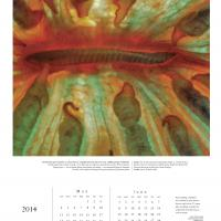 2014 Chroma Calendar: Coral - Page 3