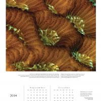 2014 Chroma Calendar: Coral - Page 5