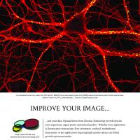 Improve Your Image - Rat Hippocampus